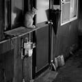 写真: 街猫514