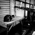 Photos: 街猫537