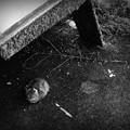 写真: 街猫868