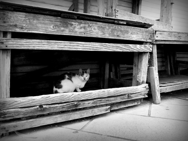 写真: 街猫875