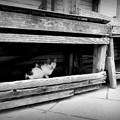 Photos: 街猫875