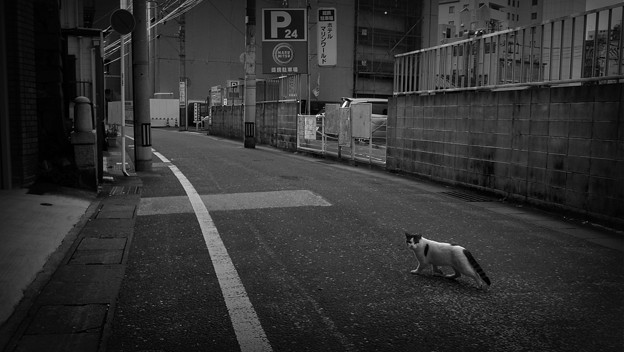 街猫882