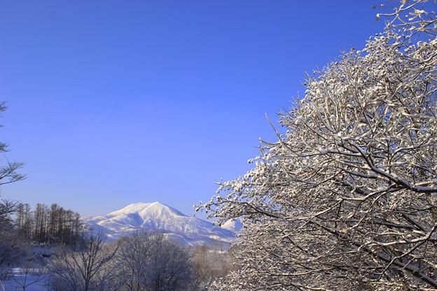 Photos: IMG_3692 - コピーa