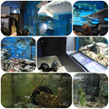 写真: 水族館1