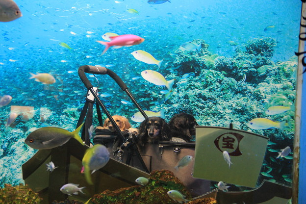写真: 水中の宝船でパチリ