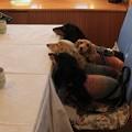 写真: レストランで朝ごはん