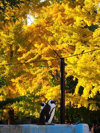 20141122 上野 黄色い世界01
