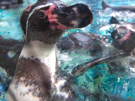 20141205 森きらら ペンギン館24