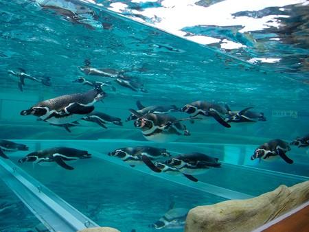 20141205 森きらら ペンギン館47