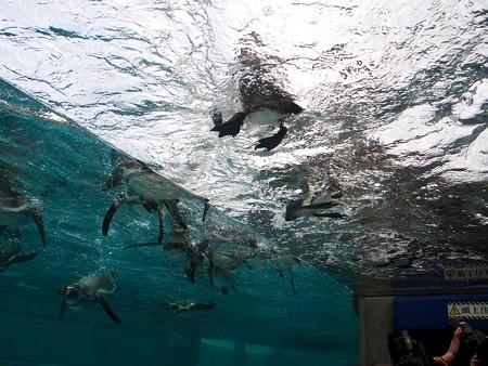 20141205 森きらら ペンギン館44