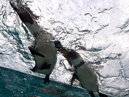20141205 森きらら ペンギン館60