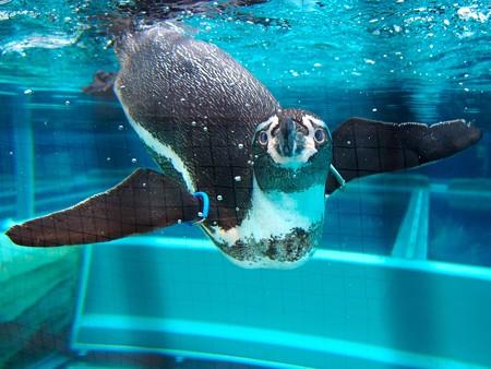 20141205 森きらら ペンギン館74