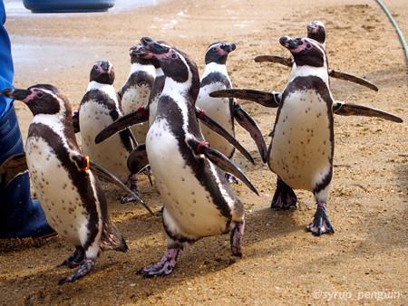 20141206 長崎 ペンギンビーチ01