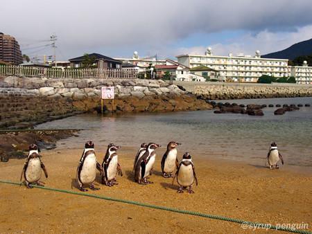 20141206 長崎 ペンギンビーチ05