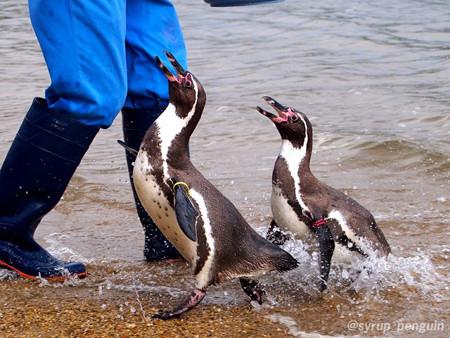 20141206 長崎 ペンギンビーチ16