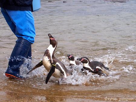 20141206 長崎 ペンギンビーチ15