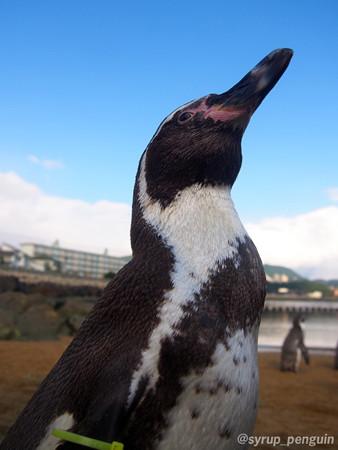 20141206 長崎 ペンギンビーチ28