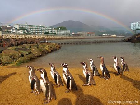 20141206 長崎 ペンギンビーチ25