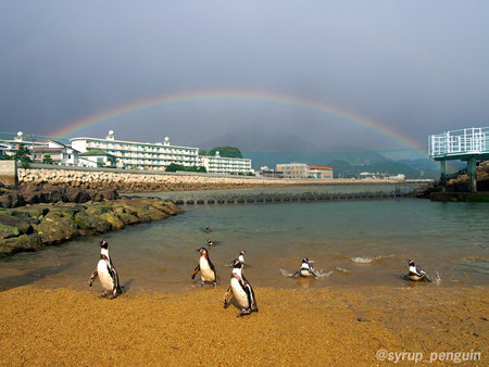 20141206 長崎 ペンギンビーチ23