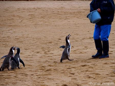 20141206 長崎 ペンギンビーチ32