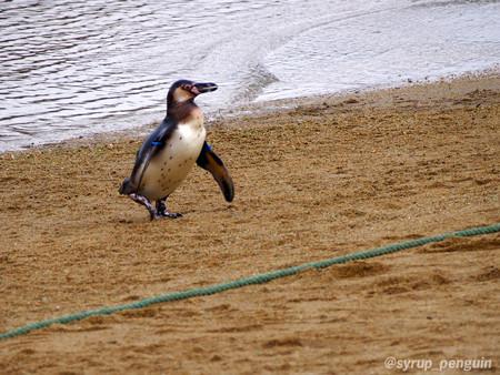 20141206 長崎 ペンギンビーチ31
