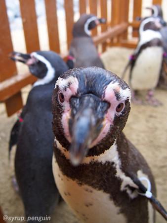20141206 長崎 ペンギンビーチ39