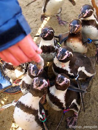 20141206 長崎 ペンギンビーチ38