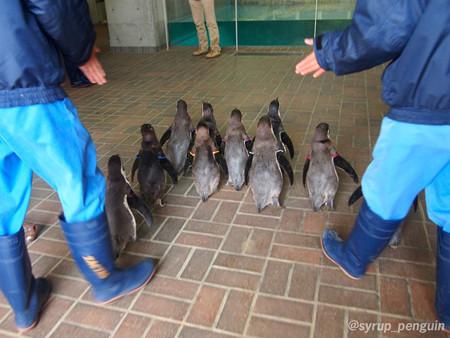 20141206 長崎 ペンギンビーチ56