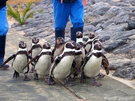 20141206 長崎 ペンギンビーチ52