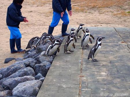 20141206 長崎 ペンギンビーチ51
