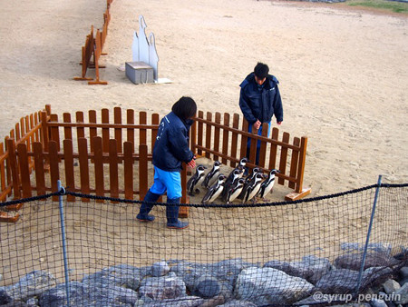 20141206 長崎 ペンギンビーチ50
