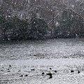 Photos: 雪の年越し