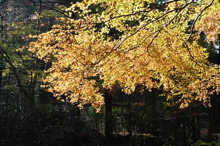 赤目渓谷の黄葉