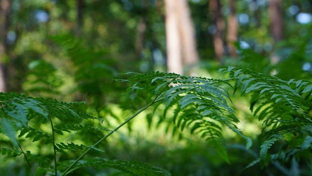 国営武蔵丘陵森林公園8