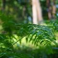 Photos: 国営武蔵丘陵森林公園8