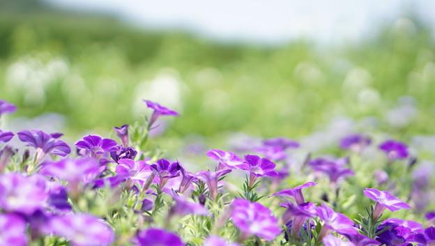 Photos: 国営武蔵丘陵森林公園10