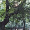 Photos: 石神井公園4