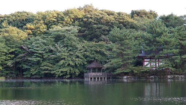 石神井公園5