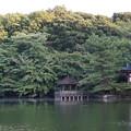 Photos: 石神井公園5