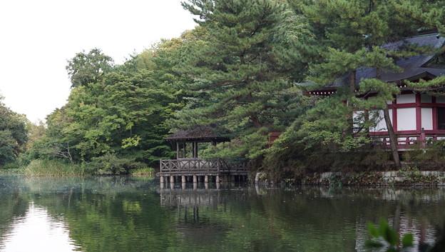 石神井公園7