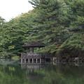 Photos: 石神井公園7