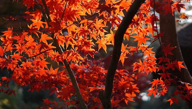 光と赤の競演 三渓園