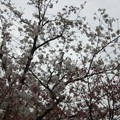 写真: 木々