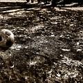 写真: 土色のボール