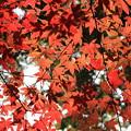 写真: 2372 三宅八幡宮の万華鏡@京都