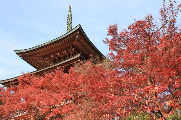 2374 洛北のとっておき@京都