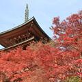 写真: 2374 洛北のとっておき@京都