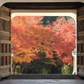 写真: 2388 宇治興聖寺の紅葉トンネル@京都