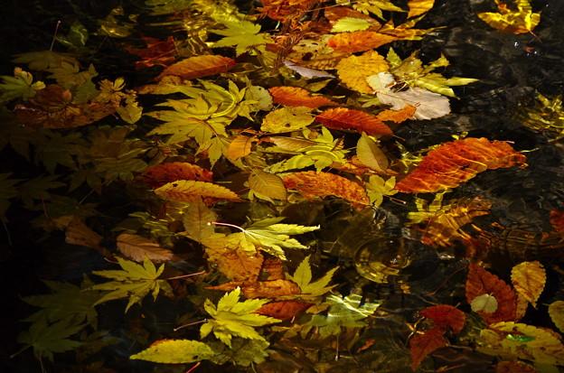 秋色さがし 20