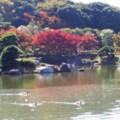 大仙公園日本庭園(3)